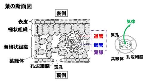 f:id:yachikusakusaki:20210226005037j:plain