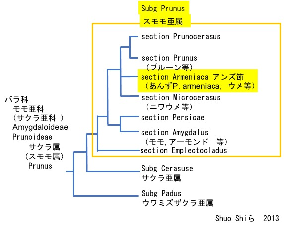 f:id:yachikusakusaki:20210303235547j:plain