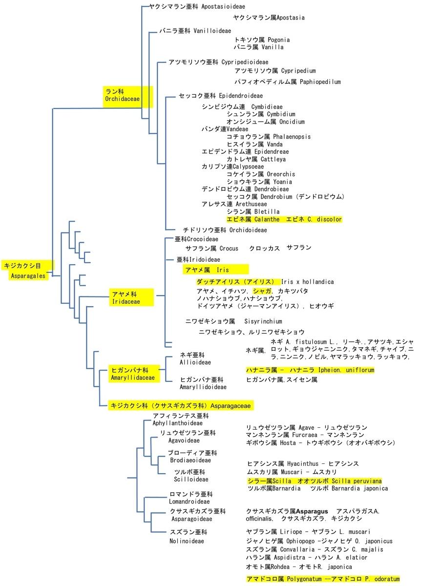 f:id:yachikusakusaki:20210417005125j:plain