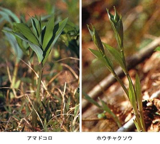 f:id:yachikusakusaki:20210417221235j:plain