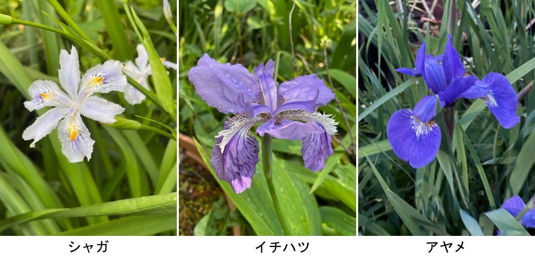 f:id:yachikusakusaki:20210428233225j:plain