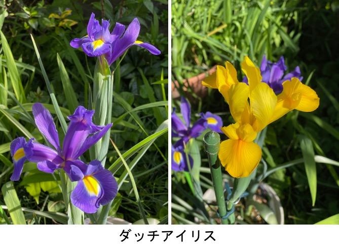 f:id:yachikusakusaki:20210428233255j:plain