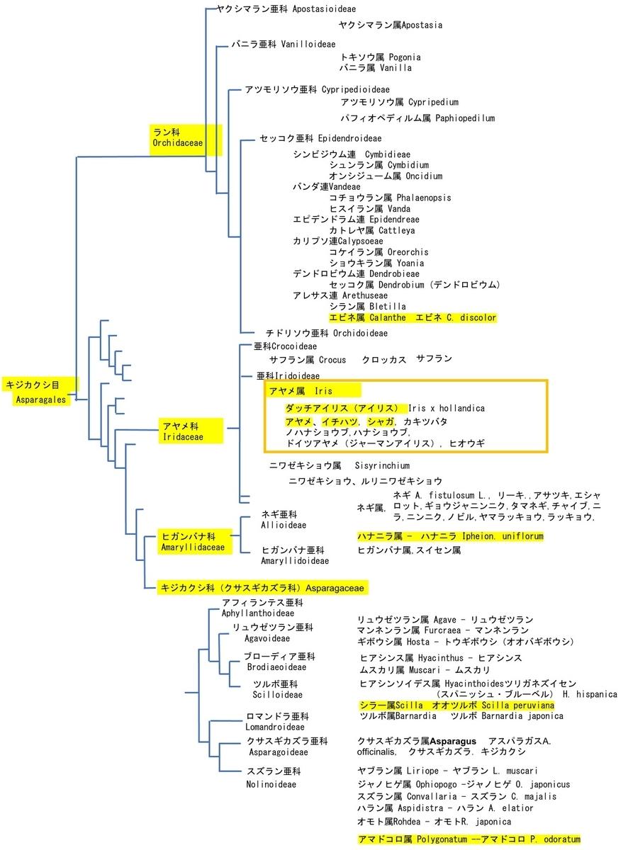 f:id:yachikusakusaki:20210428233327j:plain