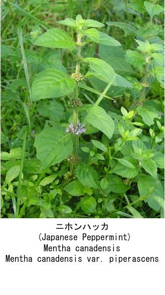 f:id:yachikusakusaki:20210522005226j:plain