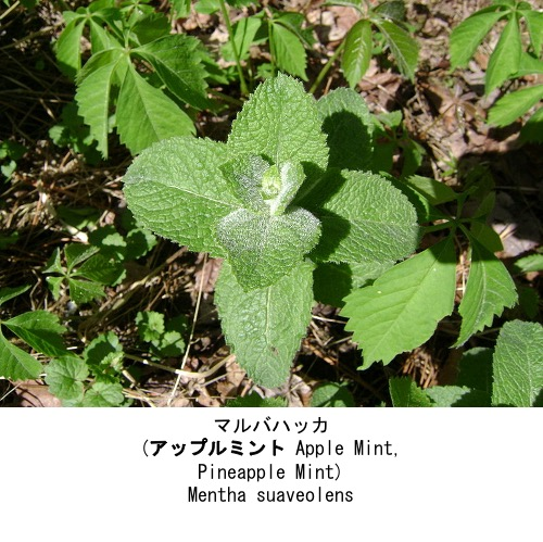 f:id:yachikusakusaki:20210522005355j:plain