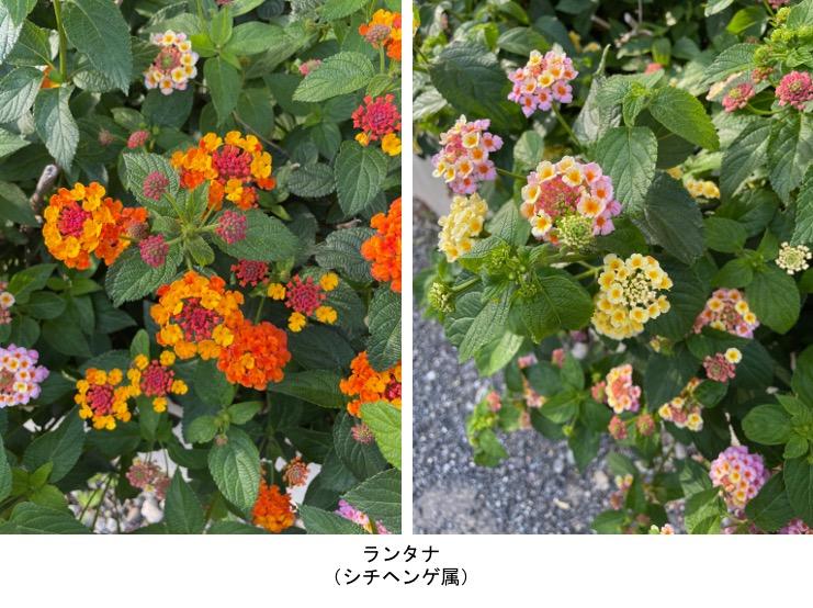 f:id:yachikusakusaki:20210531220657j:plain