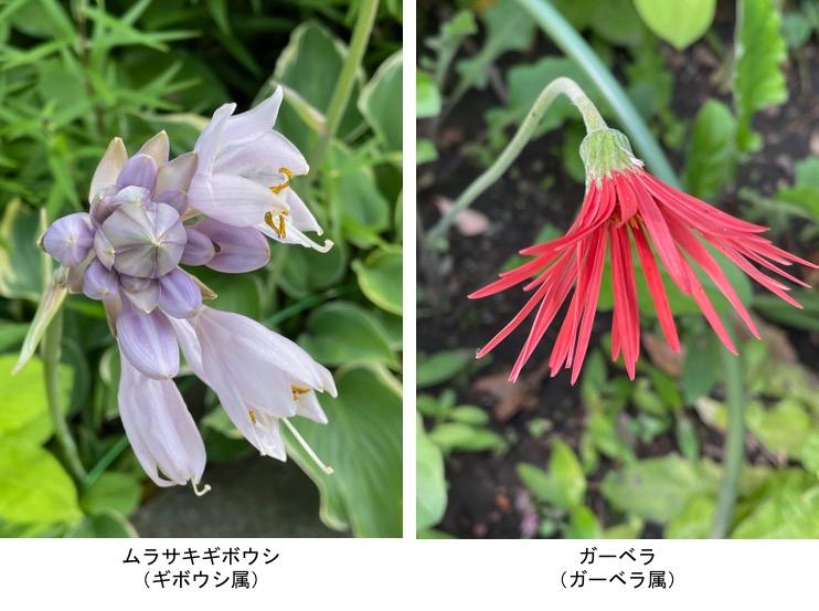 f:id:yachikusakusaki:20210531220728j:plain