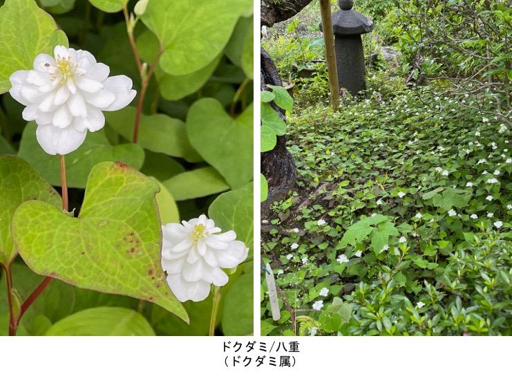 f:id:yachikusakusaki:20210531220753j:plain