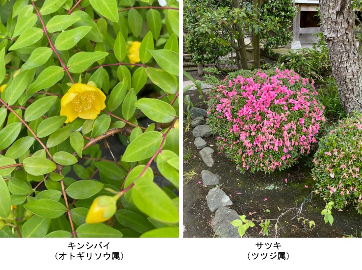 f:id:yachikusakusaki:20210531221132j:plain
