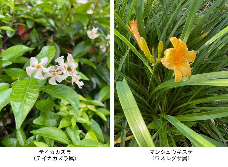 f:id:yachikusakusaki:20210531221229j:plain