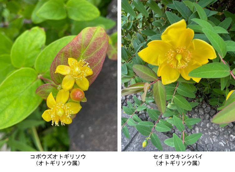 f:id:yachikusakusaki:20210531221259j:plain