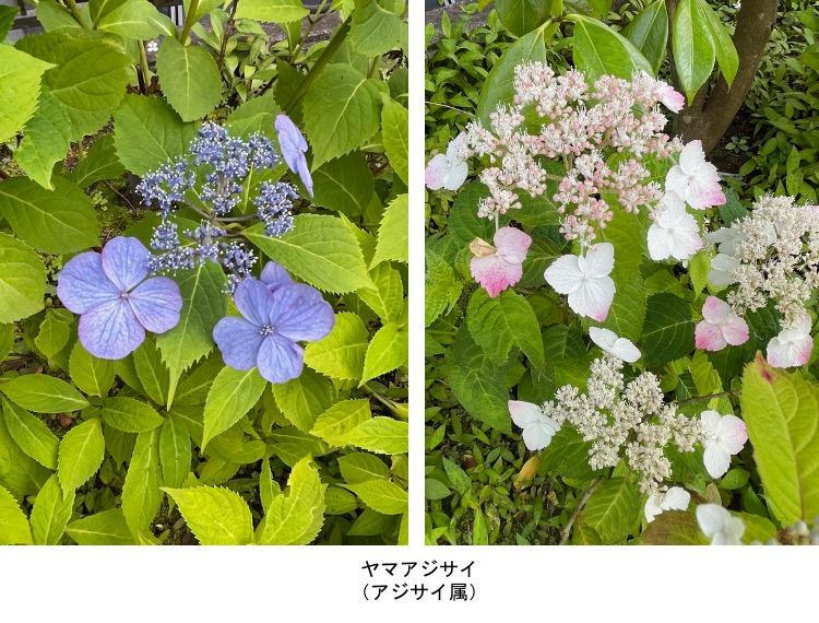 f:id:yachikusakusaki:20210531221543j:plain