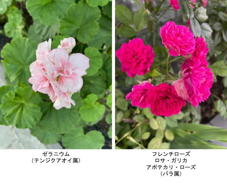 f:id:yachikusakusaki:20210531221711j:plain
