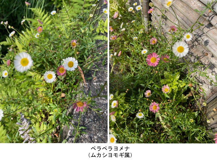 f:id:yachikusakusaki:20210602000250j:plain