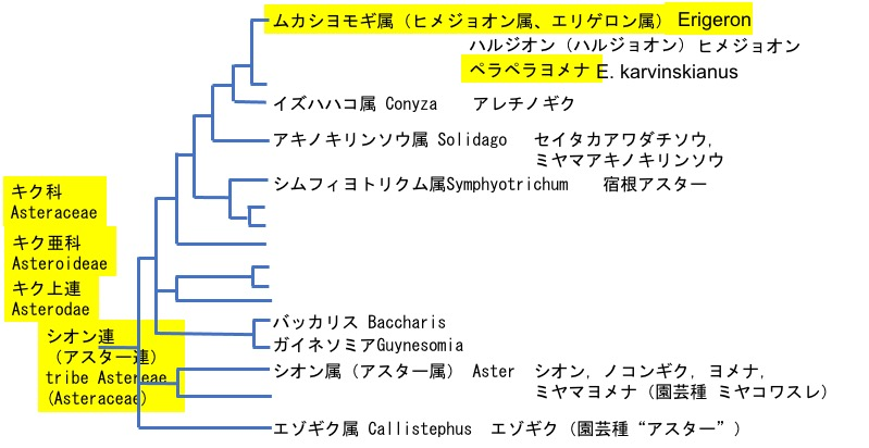 f:id:yachikusakusaki:20210602004657j:plain
