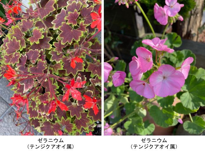 f:id:yachikusakusaki:20210602235110j:plain