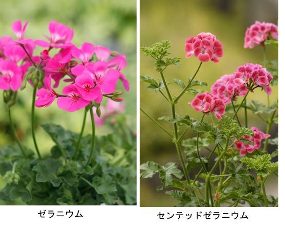 f:id:yachikusakusaki:20210602235332j:plain