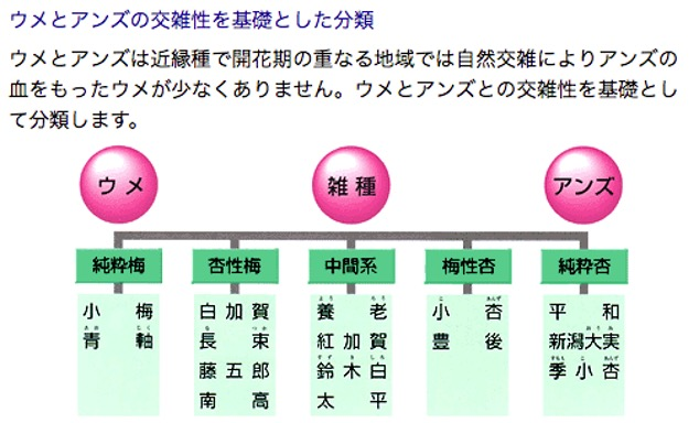 f:id:yachikusakusaki:20210610000702j:plain