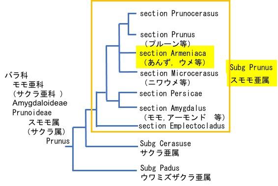 f:id:yachikusakusaki:20210610001145j:plain