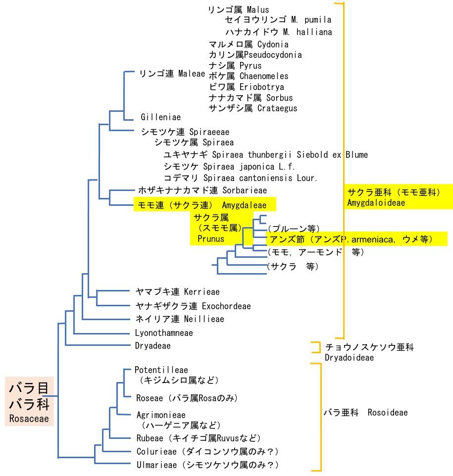 f:id:yachikusakusaki:20210610001223j:plain