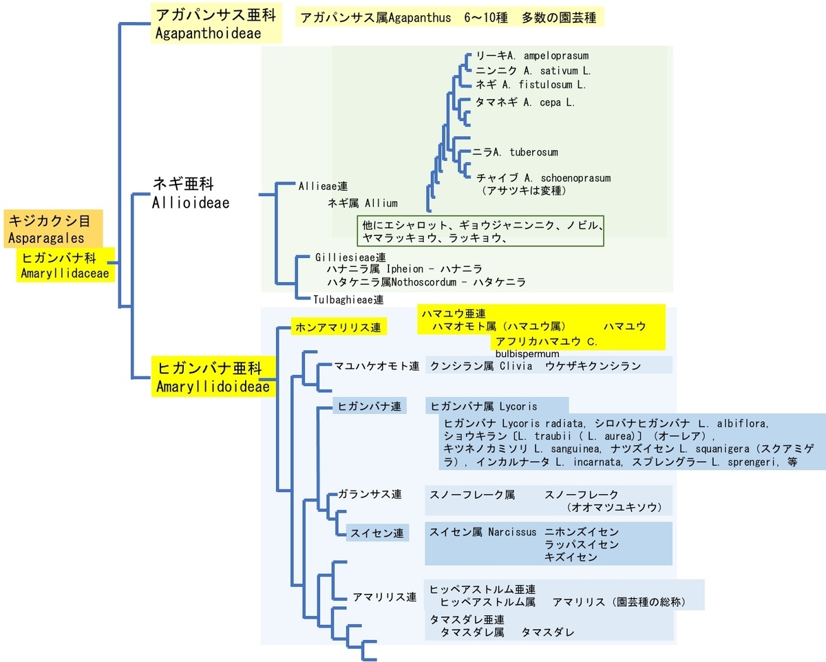 f:id:yachikusakusaki:20210616000028j:plain