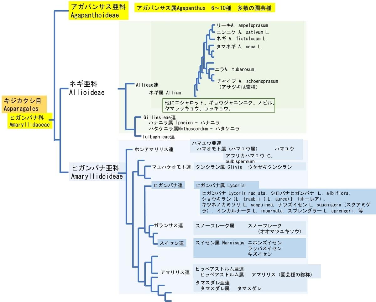 f:id:yachikusakusaki:20210616000139j:plain