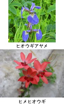 f:id:yachikusakusaki:20210616223803j:plain