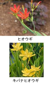 f:id:yachikusakusaki:20210616223819j:plain