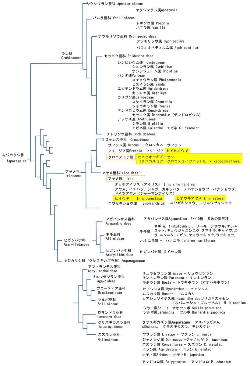 f:id:yachikusakusaki:20210616230113j:plain