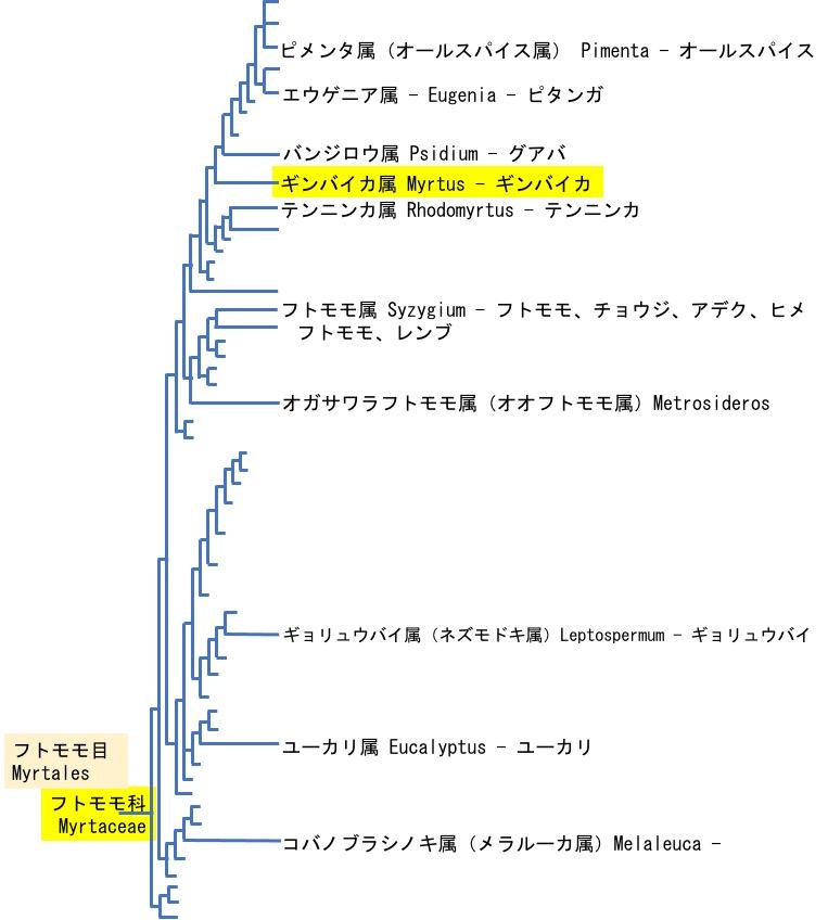 f:id:yachikusakusaki:20210618010045j:plain
