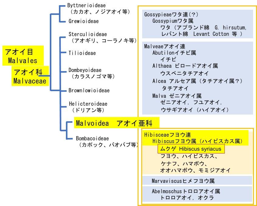 f:id:yachikusakusaki:20210719000149j:plain