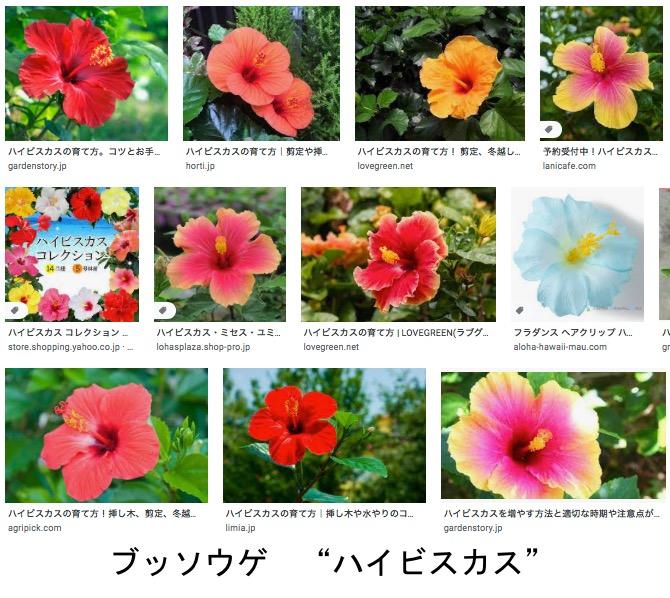 f:id:yachikusakusaki:20210720005635j:plain