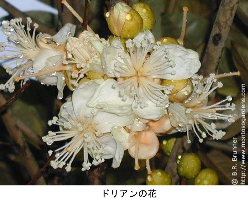 f:id:yachikusakusaki:20210720005715j:plain