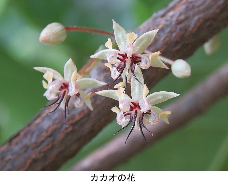 f:id:yachikusakusaki:20210720005738j:plain