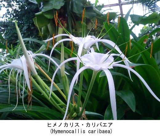f:id:yachikusakusaki:20210721010940j:plain