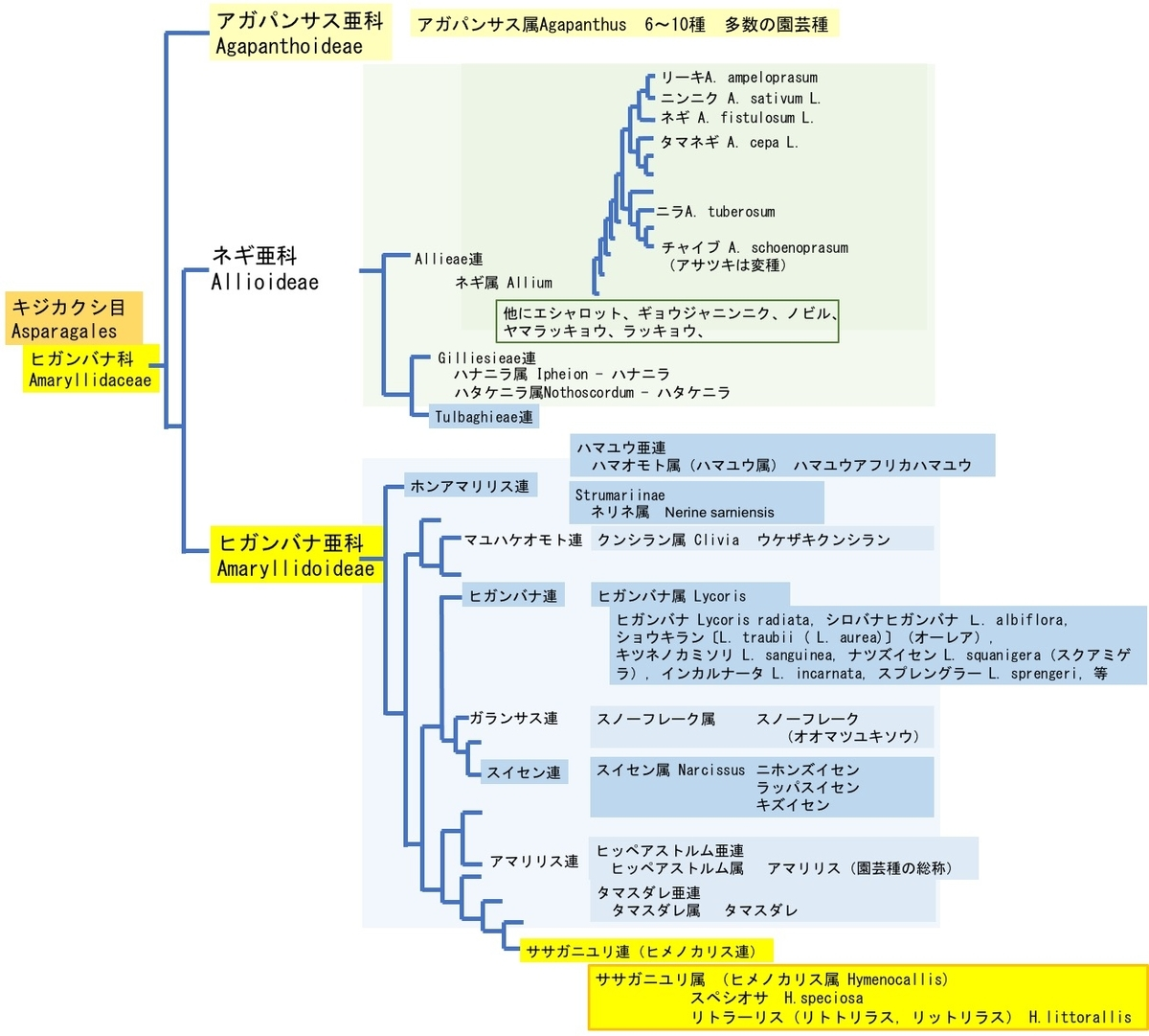 f:id:yachikusakusaki:20210721151625j:plain