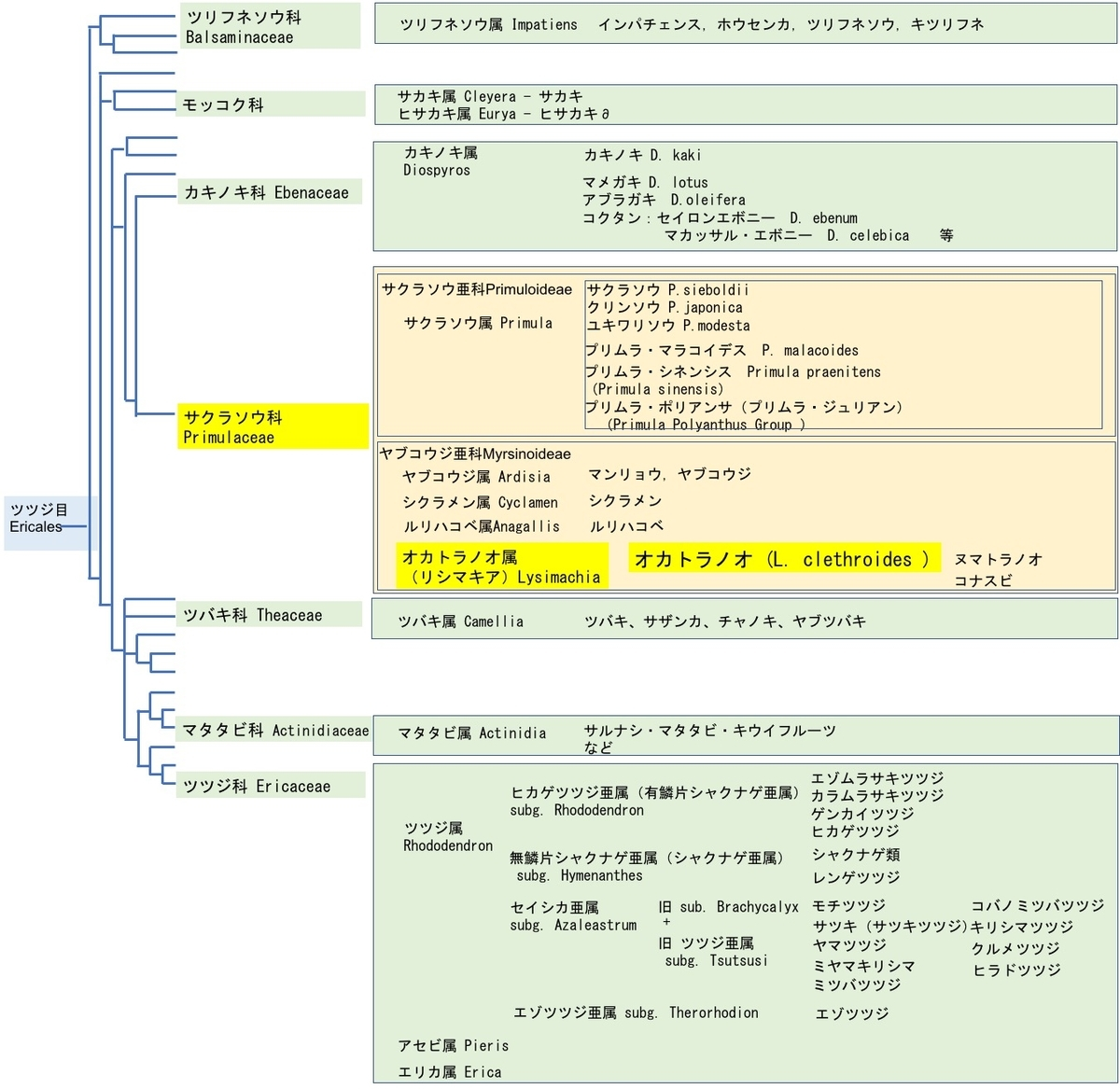 f:id:yachikusakusaki:20210722000347j:plain
