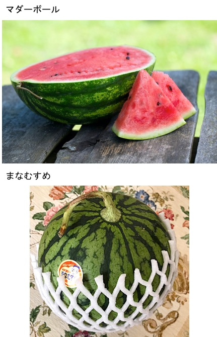 f:id:yachikusakusaki:20210727004319j:plain