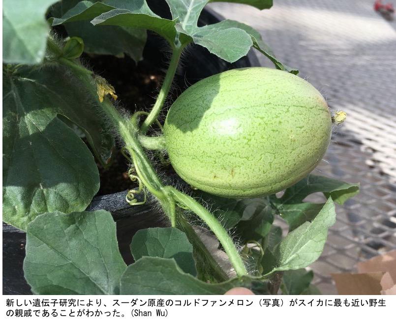 f:id:yachikusakusaki:20210727234827j:plain