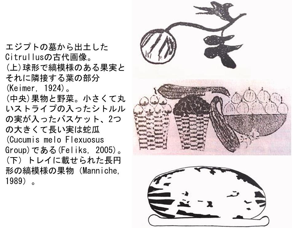 f:id:yachikusakusaki:20210728235555j:plain