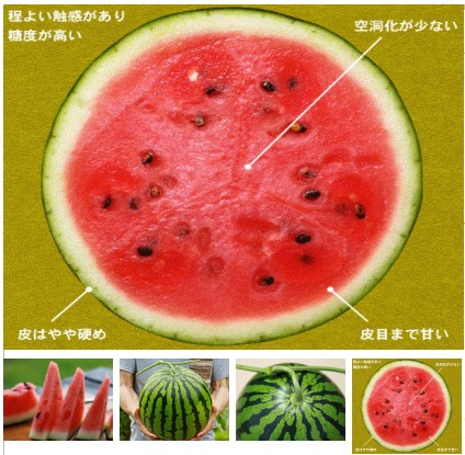 f:id:yachikusakusaki:20210730012558j:plain