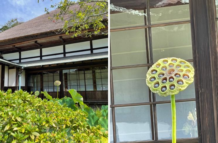 f:id:yachikusakusaki:20210914233347j:plain