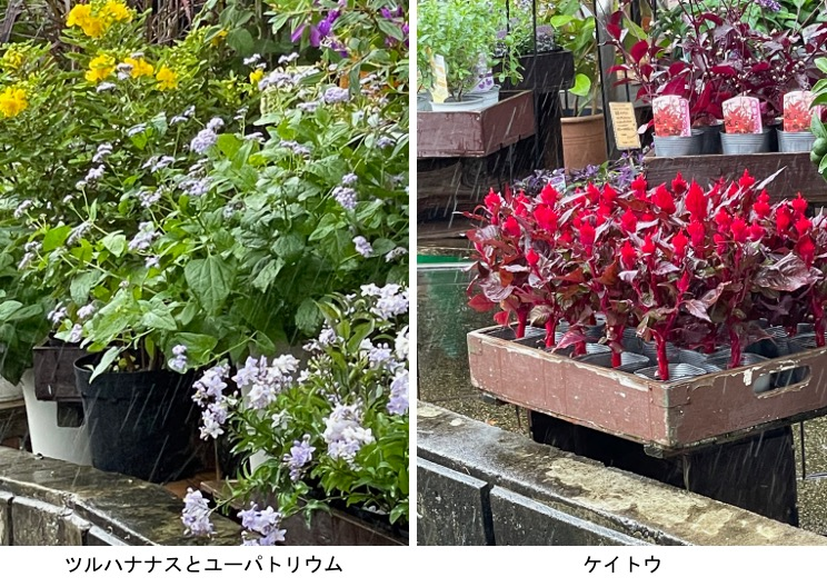 f:id:yachikusakusaki:20210919000235j:plain