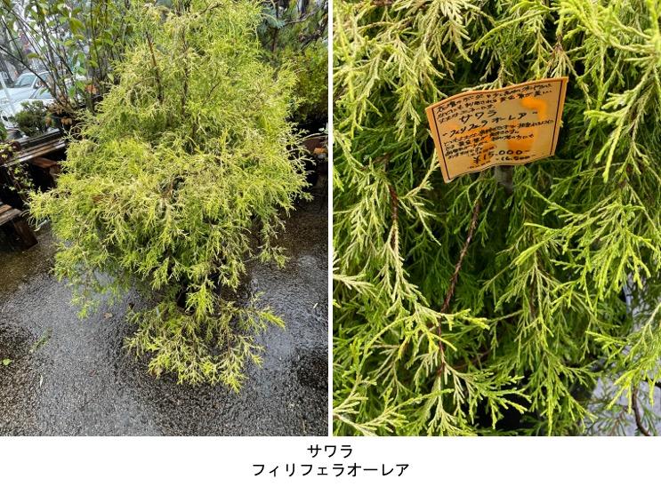 f:id:yachikusakusaki:20210919000542j:plain