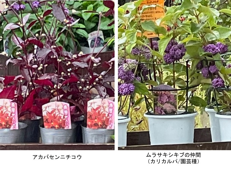 f:id:yachikusakusaki:20210919003511j:plain