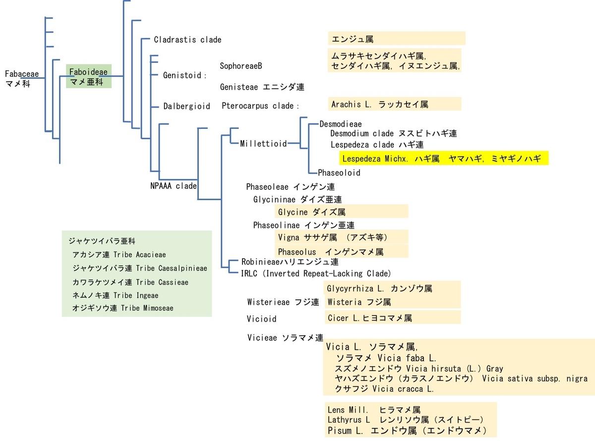 f:id:yachikusakusaki:20211009014339j:plain