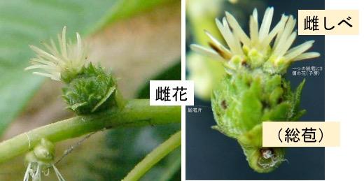 f:id:yachikusakusaki:20211011003145j:plain