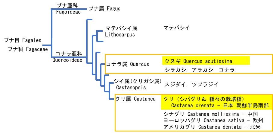 f:id:yachikusakusaki:20211011014644j:plain