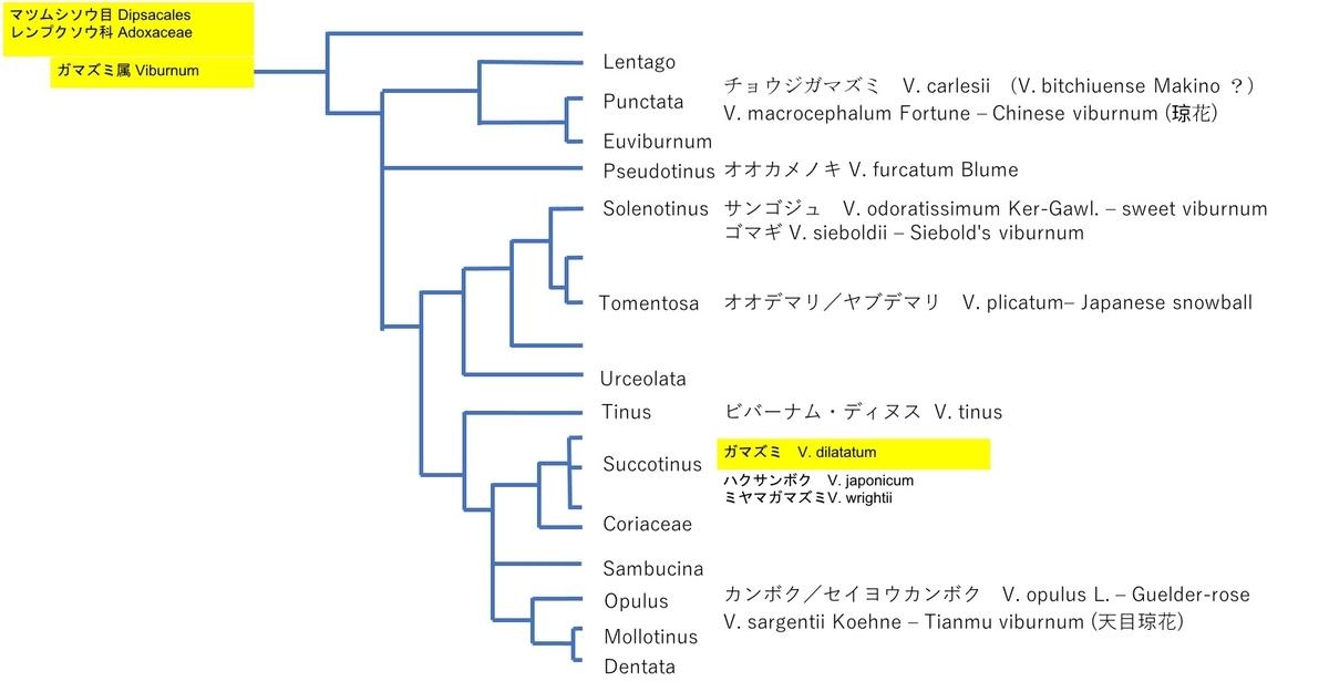 f:id:yachikusakusaki:20211015011736j:plain
