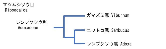 f:id:yachikusakusaki:20211015235508j:plain